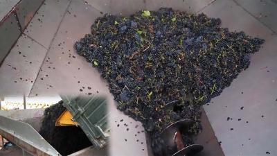 Пункты первичной переработки винограда: